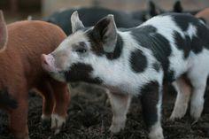 Cute Blog, Sweet Farm!