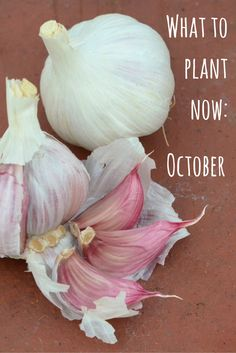 A guide to flowers and vegetables that you can plant in October for harvesting and blooming next Spring. Here's what to plant now.