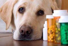 41 Best Pets Images Google Images Doggies Pets
