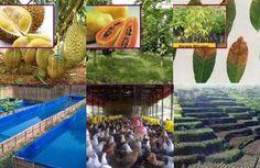 Jokowarino.com Tempat Berbagi Informasi Mengenai Pertanian Indonesia bermanfaat dalam pengembangan pertanian, peternakan dan kehutanan bagi masyarakat