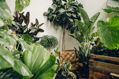 Conservatory Archives : London — Haarkon - Our home for houseplants, greenhouses, travel, photography and lifestyle.