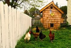 I'm loving this funky coop! Urban chicken fanciers go front and center with innovative coops - The Washington Post Urban Chicken Coop, Chicken Fence, Best Chicken Coop, Chicken Coop Plans, Building A Chicken Coop, Chicken Coops, Chicken Tractors, Chicken Breeds, Types Of Chickens