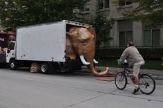 Laurence Vallieres - elephant in the truck Cardboard Sculpture, Social Behavior, Political Issues, Art Lessons, Sculptures, Elephant, Trucks, Toronto, Purpose
