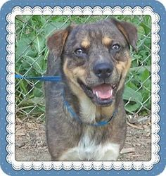 Act quickly to adopt JOSHUA. Pets at this Shelter may be held for only a short time.