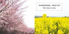 【旅游】The Colors of Jeju:济州岛最动人的两种颜色,你看过吗?