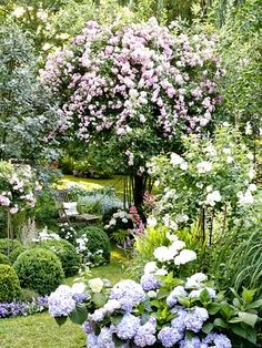 I so would love to sit under this rambling rose bush  Ax