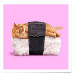 Sushi Cat als Premium poster door Paul Fuentes   JUNIQE shop