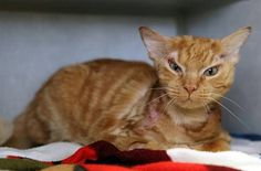 Despite Being Burned by Acid, Lucky the Orange Tabby Still Wants to Make Friends   Catster