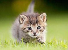 Kitten. - Kim Partridge/Partridge-PetPics/Moment/Getty Images