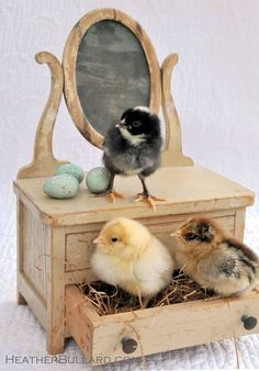 *Easter chicks
