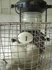 Love..... Wire Baskets