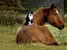 cat_horse.jpg 400×300 pixels