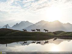 Cavalli all'alba nelle grandi foto desktop