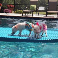 Priscilla & Poppleton: The Mini-Pigs Taking Instagram by Storm! (7/21)