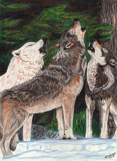 Winter Howl by AnsticeWolf on DeviantArt Howling Wolf Tattoo, Wolf Howling, Wolf Sketch, Rare Animals, Wolves, Mystic, Lion Sculpture, Deviantart, Statue