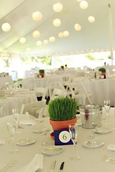 To save money I grew wheatgrass in pots to be our table centerpieces. It was inexpensive and easy to do.