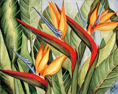 Birds of Paradise Painting by Barbara Ann Robertson