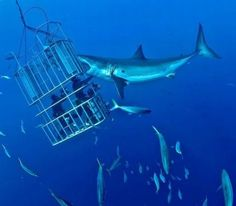 I will do this one day.  Shark-cage-diving.