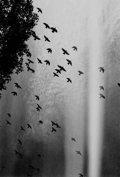 Black and white silence nature