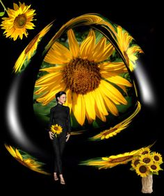 Sunflowers -  - Diese  Collage wurde erstellt von Gerd Schremer