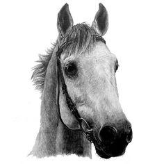 #horsedrawing #horseportrait #horsepainting #equineartist