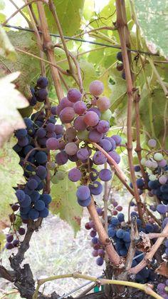 Best bc wines from Kamloops 2016