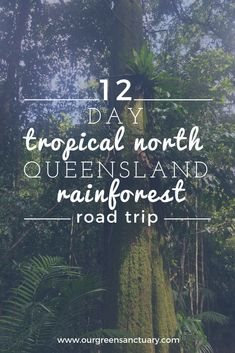 Rainforests, Green Life, Tropical Plants, Habitats, Road Trip, National Parks, Survival, Old Things, Earth