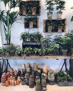 """189 gilla-markeringar, 3 kommentarer - Erika  (@crazyflowerlady) på Instagram: """"Saturday  Det #händer ju att jag köper en grön växt ibland också... Älskar Pilea bland annat.…"""""""