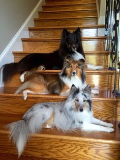 The one in the middle looks just like Friendly, my favorite dog ever. He was hit by a car and died last spring.