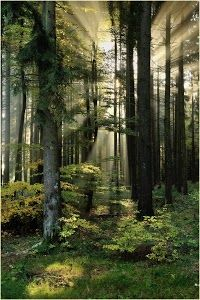 Enchanted Forest, Germany :