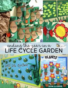 Life Cycle Garden hallway display- See how we delighted our students by turning our hallway into a life cycle science garden! We displayed our class anchor charts, butterfly math, and writing about the life cycles of  frogs, butterflies, and plants. We even turned our students into butterfly kids! This post has  FREE life cycle printables for 1st, 2nd, or 3rd grade including a Butterfly Kids narrative writing craft! So many fun activities to get kids writing about science!