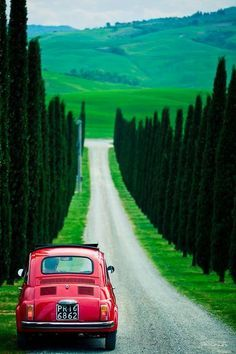 All things Italian - Fiat and cypress-lined street in Tuscany
