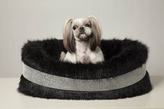Bichon in his Blinky Band Black Bed by Lola Santoro Pet Accessories