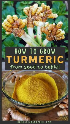 Get The Perfect Herb Garden With These Simple Tips Herb gardening is an excellent way to make sure that your family is getting the best produce that they can. You will not be using any pesticides, and since you are growing everything Turmeric Seeds, Grow Turmeric, Turmeric Plant, Growing Herbs, Growing Vegetables, Permaculture, Comment Planter, Organic Gardening Tips, Plantar