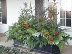 jardinière de pin