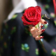Image about flowers in Amooni ♥️😍 by amoonii♥️ Holding Flowers, Love Flowers, Girly Pictures, Beautiful Pictures, Hand Pictures, Flower Girl Photos, Rose Images, Girls Hand, Cute Girl Pic