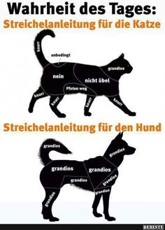 Petting instructions for the cat / dog . Tierischer Humor, Man Humor, Cute Funny Animals, Funny Cats, Image Facebook, Love My Dog, Cat Dog, Facebook Humor, Good Jokes