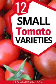 Small tomato varieties like cherry tomatoes and grape tomatoes are ideal for small vegetable gardens and container gardens. Here are 12 of the best small tomatoes to plant in your garden.