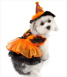 New, LED Lights for dog costumes! Pets will spook with a flash in this Witch costume with traditional Halloween colors.Under the orange mesh skirt is a new Fibe