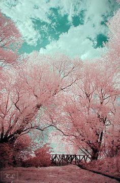 Pink and aqua just divine colours
