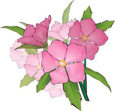 Grab This Free Summer Flower Clip Art: Wild Roses