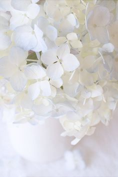 Hydrangea, Texture Tuesday {Keeping With the Times