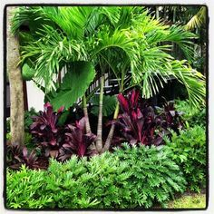 Tropical landscape | Yelp