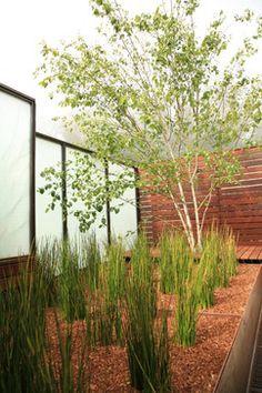 Twin Peaks Modern - modern - Landscape - Other Metro - The Garden Route Company