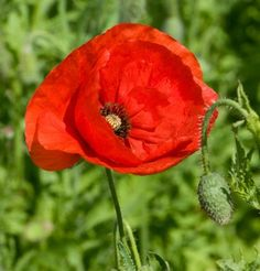 Marvelous 23 Best Armistice Day Poppies Ideas https://decoratio.co/2017/11/12/23-best-armistice-day-poppies-ideas/ The issue of the way to keep in mind the fallen was brewing. It's also called Poppy Day. Veterans Day is observed in honor of all of the soldiers who have served or are serving in the USA armed forces.