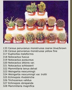 Mini Cactus Garden, Cactus House Plants, Cactus Terrarium, Rock Garden Plants, Succulent Gardening, Cactus Flower, Cactus Names, Succulent Names, Cacti And Succulents
