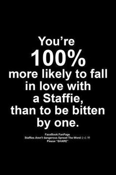 If you have ever had the privilege of having your life blessed by a Staffy you will understand this photo and the sentiment behind it. #StaffordshireBullTerrier