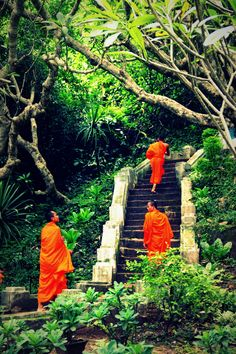 monks; always the orange