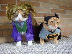 Batman and Joker Halloween Cat Costumes Costume Chat, Pet Costumes, Costume Ideas, Couple Costumes, Chat Halloween, Costume Halloween, Joker Halloween, Halloween Humor, Funny Animals With Captions