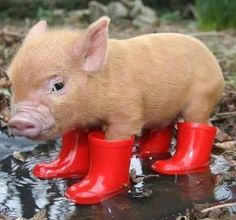 "Don't want to get those ""piggies"" wet. ;p"